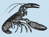 A lobster: one kind of arthropod.