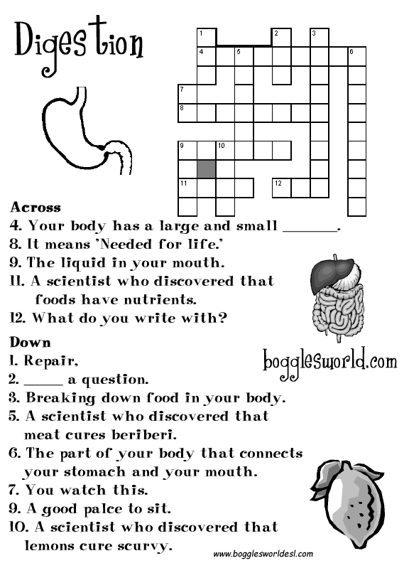 Digestion CrosswordDigestive System For Kids Worksheets