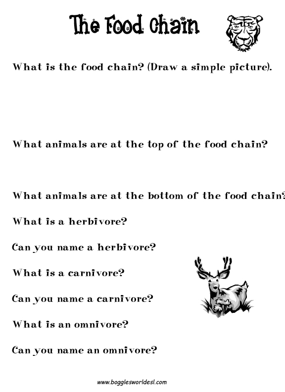 Worksheet Food Webs For Kindergarten Students boggles world esl worksheets for kids food chain
