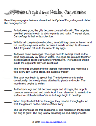 Frog Lifecycle Reading Comprehension Worksheet
