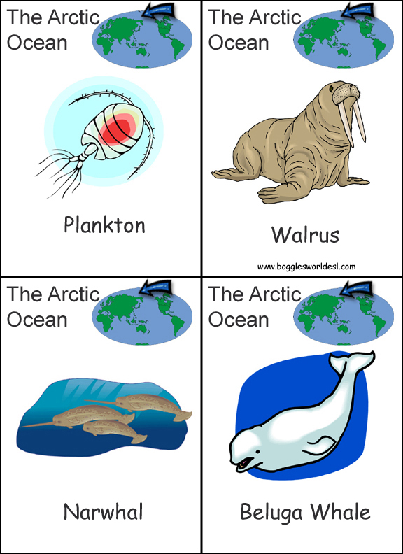 Continent and Ocean Flashcards – Continents and Oceans Worksheet