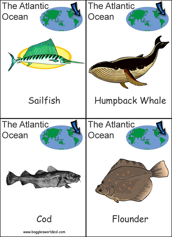 Image of: Oceanarium Continents And Oceans Arctic Ocean Card Set Lanternfish Esl Continents And Oceans Flashcard Game
