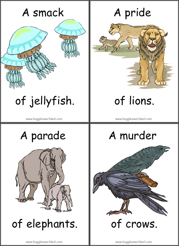 Collective Nouns of Animals Flashcards