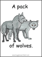 Collective Nouns of Animals Sample Flashcard: A Pack of Wolves.
