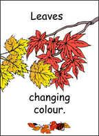 A sample flashcard: leaves Changing Color