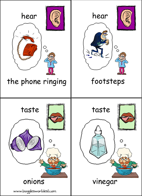 Five Senses Flashcards