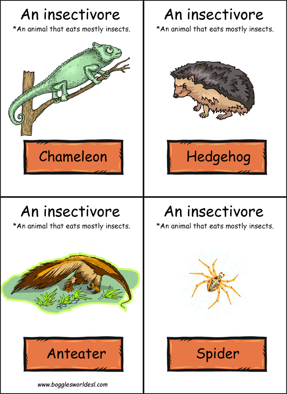 Food Chain Flashcards