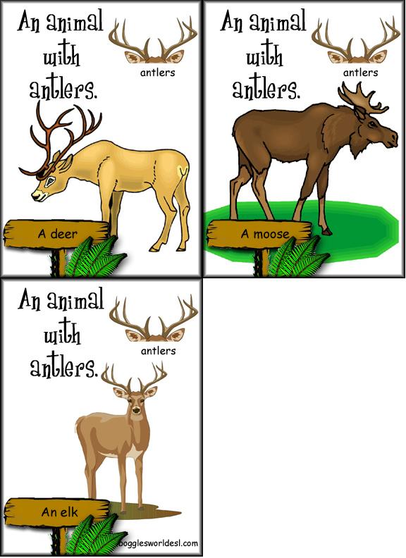 Animal Body Parts Flashcard Game