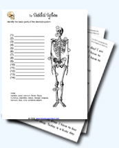 a collection of skeletal system worksheets - Skeletal System Worksheet
